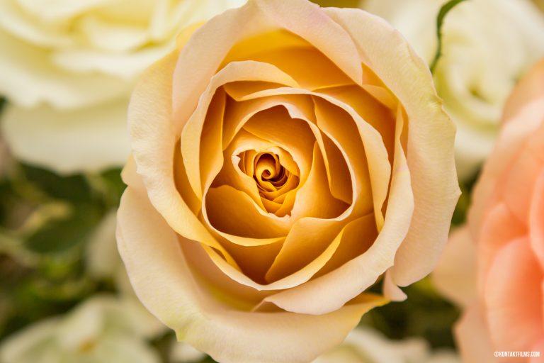 Whisky Jack Flowers – Romantic Detail | Kontakt Films